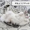 猫の病気 ~甘えん坊すずめ~