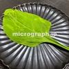 ほうれん草の顕微鏡写真