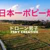 日本一の鴻巣ポピー畑!空撮絶景
