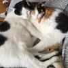 我が家の猫自慢!個性豊かな4匹のねこたち・・・
