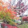 嵐山、嵐峡の紅葉を観に行く②観光39R...過去20161127京都