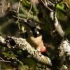 戸隠森林植物園探鳥報告160925
