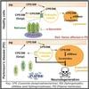 リソソームの肥大化によってパーキンソン病を引き起こすメカニズム (Cell Metabolism 2018年10月2日号掲載予定論文)