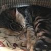 猫(と自分)のためにカンタン断熱対策