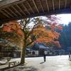 南足柄 最乗寺道了尊の紅葉&小田原 松永記念館の庭園散歩