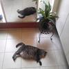 ネコの時間