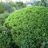 新緑のお庭