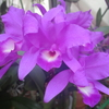 「まつこの庭」の春のラン(3)