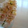 【ガーデニング・日記】お花の写真と近況など
