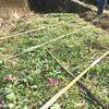 はじめての自然農のお米作り:苗代
