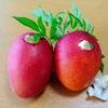 マンゴーの季節がやってきました!購入には「ふるさと納税」がおすすめ