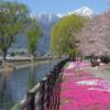 安曇野 桜巡り 1