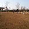 新横浜公園のドックラン