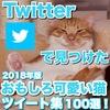 Twitterで見つけた猫の可愛い&おもしろ動画・画像ツイート集100選!