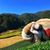 【茶畑通信】2018年11月 秋番茶収穫を終えました!新茶に向けての準備期間です。