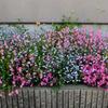 4月22日 アパートの花たち 〜Part.1 〜
