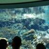 美ら海水族館へ行った。子連れや海が好きなら是非