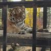 動物との距離が近い!京都市動物園のスゝメ
