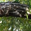 【野鳥】12月の恩田川レポート@奈良山公園&奈良川&恩田川