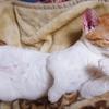 薫風やわれに遊べと眠り猫 野中久美子