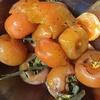 干し柿の糖度曲線を描きたい‥?~Dried persimmon sugar content?