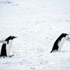 氷の上を歩く時はペンギンみたいにするとこけにくくなるらしいです
