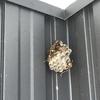 湖西市で軒下にできたハチの巣を退治してきました!