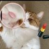 話題のシャネルのリップスキャナーで愛猫のお鼻や肉球と同じ色のリップを探してみた。