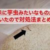 米に芋虫みたいなものがわいたので対処法まとめる