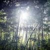 【半径100mの写真展】早朝の諏訪神社in北川尻ーA7R3 x CONTAX Planar 50mm F1.4ー