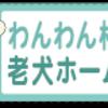老犬ペットホテルわんわん柏 16歳💓 朝夕食後の遊び・健康チェック(わんわん柏)