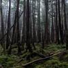 白駒の森を歩く