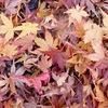 さかのぼってお弁当 と 秋の落しものにて