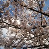 春は学びの季節?新しいことを始めるにはいいタイミング
