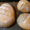酸っぱいパン(サワーブレッド)への道7 - あれ?できたぞ(笑)サワー種ができた!コツを記録します。