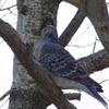 近所の堤防で野鳥観察〜身近な自然にも鳥いっぱい〜