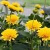 「賢治ガーデン」の写真を展示…。