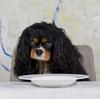 食欲不振!ごはんを食べない犬にエサを食べさせる裏技