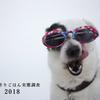 """犬の手作りごはん実態調査2018【犬の手作りごはんサイトNo.1""""わんシェフ""""より】"""