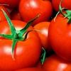 トマトジュースは二日酔い予防に最適。飲酒前にもおすすめ。