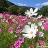 大自然と多種多様なお花に癒される!『広島市植物公園』に行きました @佐伯区倉重