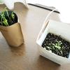 【ホウレンソウ】と【レタス】の様子。あと、次に植える野菜のこと。