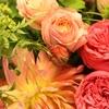 和の花、洋の花、いのちの光