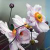 秋風の中花は咲いていて、57歳の若さで旅立った。