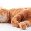 睡眠と長生きの法則
