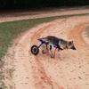 専門家が語る犬の足腰(1) ~ケアマネージャー編:日頃の習慣、見直してみよう