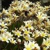 白 白・・・ 白い花たち