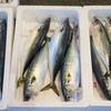 2017年3月23日 小浜漁港 お魚情報