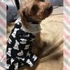 【犬服】無料の型紙でお揃いのシロクマワンピース♪