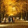 国営昭和記念公園に紅葉を撮りに行って来た!